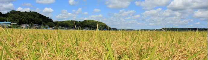 米・芋・食品・農業用フレコンバック